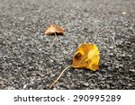 Fallen Autumn Leaves Laying On...