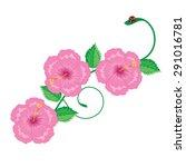 Illustration. Hibiscus Chinese...