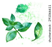 watercolor plant mint. | Shutterstock .eps vector #291066611
