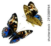 Stock photo set of flying blue butterflies isolated on white background the blue pansy butterfly 291088964