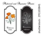 California Poppy Flowers....