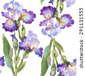 Summer Meadow Iris Flowers...