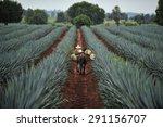 tequila  jalisco  mexico  ... | Shutterstock . vector #291156707