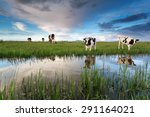 cows on pasture by river over... | Shutterstock . vector #291164021