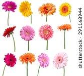 flower  single flower  gerbera... | Shutterstock . vector #291168944