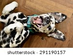 Stock photo dalmatian dog smiling 291190157