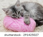 Fluffy Gray Kitten With A Pink...