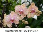spray orchid pink | Shutterstock . vector #29144227