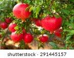 Ripe Pomegranate Fruit On Tree...