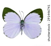 Small photo of Purple butterfly, Delias butterfly (Delias belisama) in fancy color profile, isolated on white background