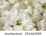 Macro Photo Of White Lilac...