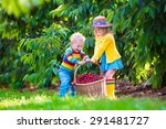 kids picking cherry on a fruit... | Shutterstock . vector #291481727