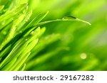 water drops on grass | Shutterstock . vector #29167282
