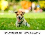 Coloful Portrait Of A Dog