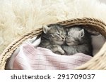 Cute Tabby Kittens Sleeping An...
