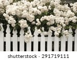 Stock photo white rose rose white rose with white fence 291719111