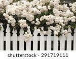 White Rose  Rose  White Rose...