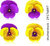 Viola  Flowers  Isolated On...