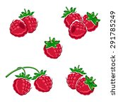 raspberry set. vector | Shutterstock .eps vector #291785249