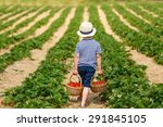 funny little kid picking and...   Shutterstock . vector #291845105
