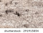 texture old wood background. | Shutterstock . vector #291915854