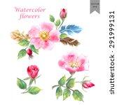 Vector Watercolor Flowers. Hand ...