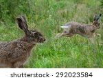 Stock photo hare in the meadow sharpness on the eye 292023584