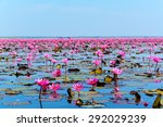 Sea Of Pink Lotus In Udon Than...