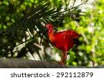 scarlet ibis   Shutterstock . vector #292112879