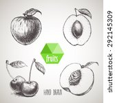 hand drawn sketch style fruits... | Shutterstock .eps vector #292145309