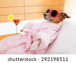 Stock photo jack russell dog relaxing and lying in spa wellness center wearing a bathrobe and funny 292198511