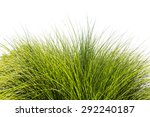 green tall grass leaves over... | Shutterstock . vector #292240187
