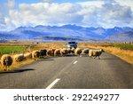 Herd Of Sheep Is Crossing...