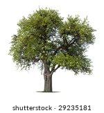 blooming apple tree in spring | Shutterstock . vector #29235181