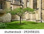 Small photo of CAMBRIDGE, ENGLAND - MAY 13: Lone Chestnut Tree in Court at Trinity College, University of Cambridge, England - Popular Tourist Attraction and Rumored to be Isaac Newton Apple Tree on May 13, 2015