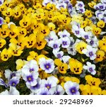 background of colored flowers. | Shutterstock . vector #29248969