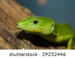 wildlife | Shutterstock . vector #29252446