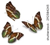 Beautiful Three Brown Butterfl...