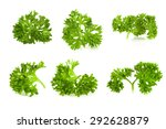 Parsley Isolated On A White...