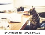 Stock photo fascinated little kitten staring at the monitor of a desktop computer as it sits on its owners lap 292659131