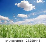 Green Grass And Sky  Photo 6