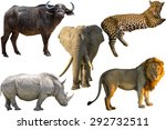 African Big Five Animals ...