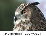 Stock photo beautiful eurasian eagle owl 292797134