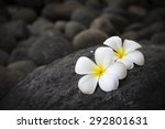 Exotic White Flowers On The...
