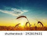 Golden Harvest Under Blue...