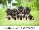 Group Of Four Little German...