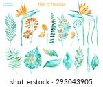 Vector Floral Set.colorful...