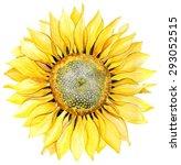 watercolor background....   Shutterstock . vector #293052515