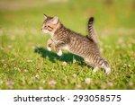Little Tabby Kitten Running On...