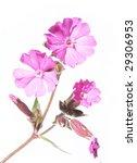 spring flora | Shutterstock . vector #29306953